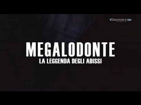ritrovato megalodonte morto. incredibile!!