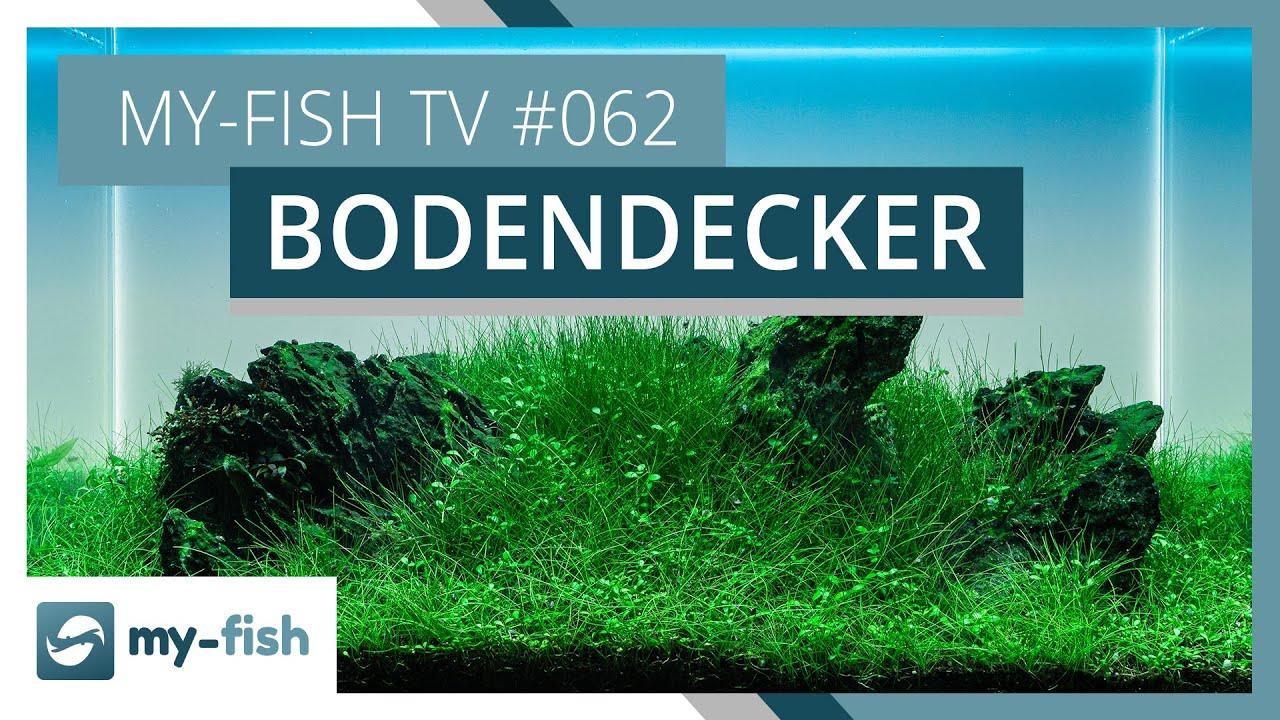 my-fish TV - Deine Nr. 1 Anlaufstelle für alle Themen rund um die Aquaristik 2
