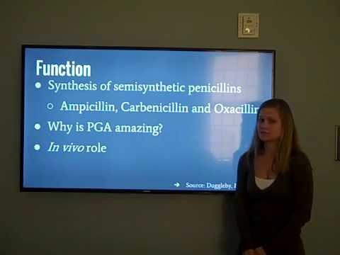 Penicillin G acylase