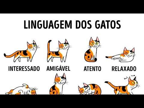 Linguagem dos gatos: Como entender melhor seu felino