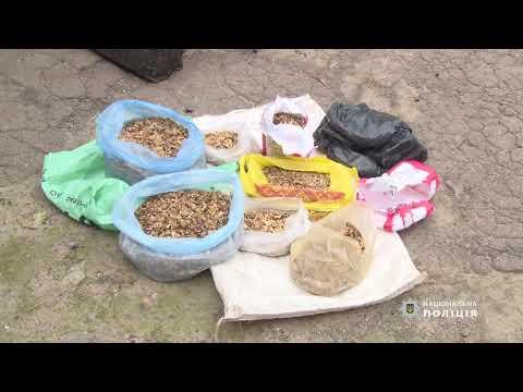 Затриманим у Житомирі наркозбувачам обрано міри запобіжного заходу