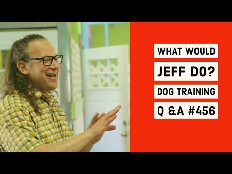 Stop dog reactivity | Dog ecollar training tips | What Would Jeff Do? Dog Training Q & A #456