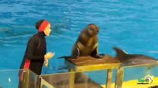 Video Amazing Dolphin Show at Fakeih Aquarium Jeddah MP3, 3GP, MP4, WEBM, AVI, FLV Juli 2018