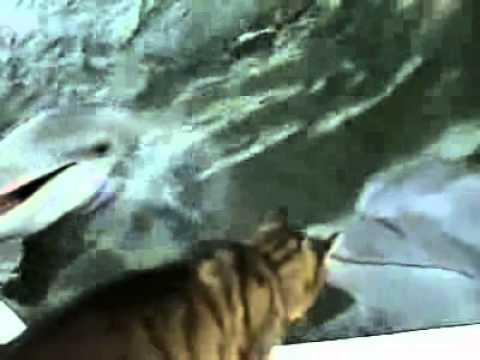 Gatto incontra delfino
