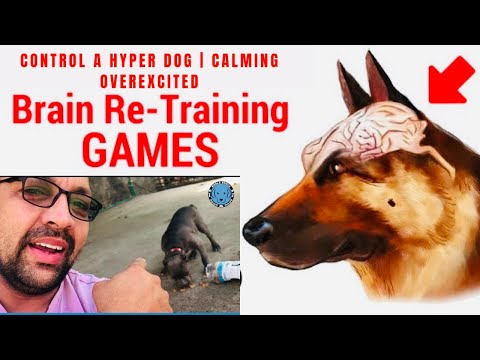 Dog Training – Tips And Tricks To Trained A Well Mannered | Calm An Excited Puppy. BholaShola