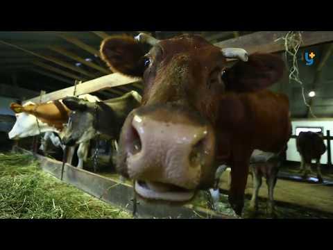 Про здобутки та труднощі ведення фермерського господарства в Україні