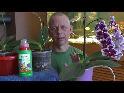 Orchideen Pflege: Orchideen einpflanzen, umtopfen gan ...