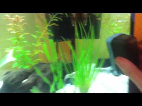 comment nettoyer vitre aquarium la r ponse est sur. Black Bedroom Furniture Sets. Home Design Ideas
