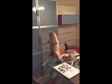 Kitty Jump Fail