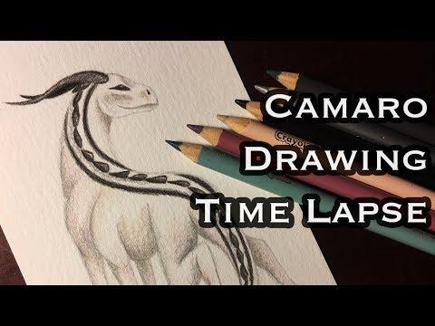 Camaro Animal Crayola Color Pencil Drawing Time Lapse | Anila Tac