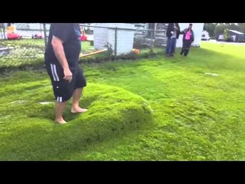 Spuchnięta trawa niczym materac wodny