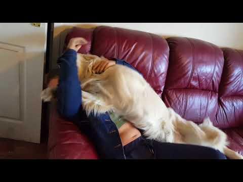 Omistaja palaa pitkältä reissultaan – Koirat sekoaa onnesta