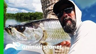 Fishermen Catch Over 100 Tarpon During Trip To Mexico | Fish or Die by Animal Planet
