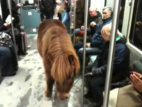 Pony Takes the Train in Berlin – Video