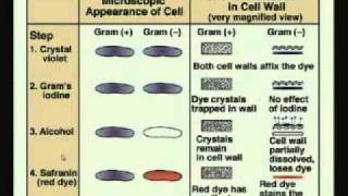 Mod-01 Lec-02 Glimpses Of Microbial World - Bacteria