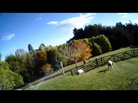 UDI U839 quadcopter meets some sheep