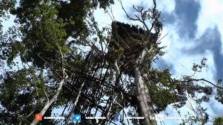 Nonton Karowai Suku Kanibal Pemakan Manusia Di Pedalaman Papua Film Subtitle Indonesia Streaming Movie Download