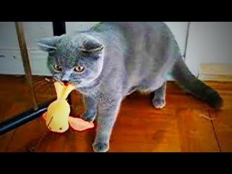 Funny cat videos - Naughty Cats  Funny Bully Cats (Part 1) [Funny Pets]