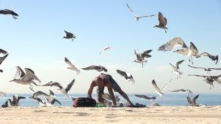 Crazy Bird swarm Prank