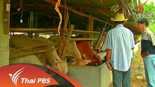 ทีวีจออีสาน - ปัญหาเนื้อวัวราคาแพง