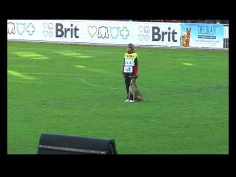 FCI-IPO - 2013 Granata iz Gratsano (Obedience)