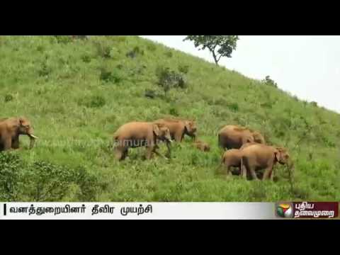Officials-chase-away-elephants-into-forest-in-Koodalur-Ooty