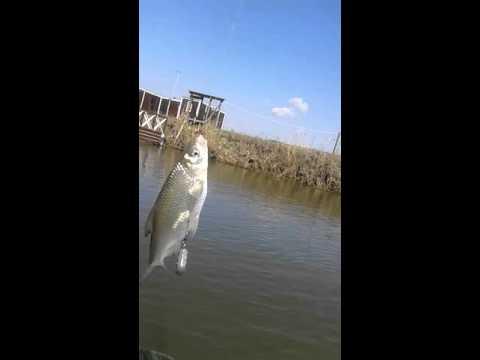 рыбалка на воблу весна астрахань 2015