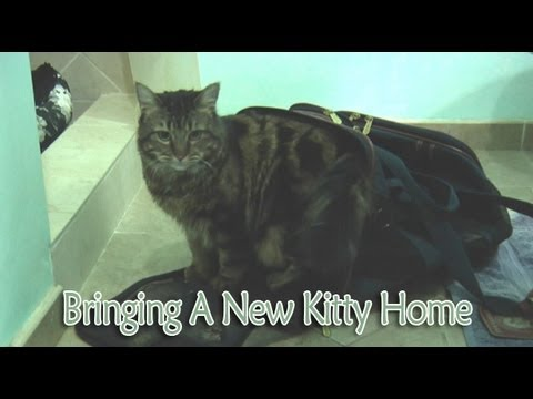 Ep 12 – Cat Care: Bringing A New Kitty Home