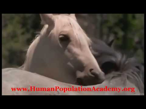 смотреть порно видео девушки с конями