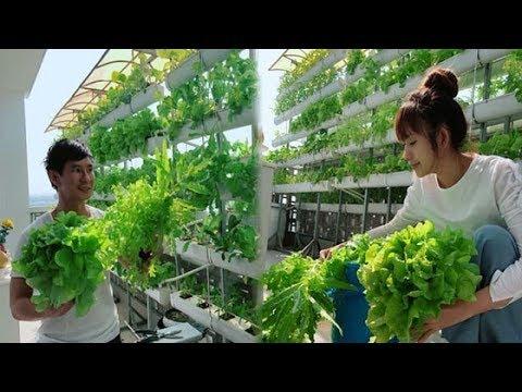 Đến nhà Lý Hải – Minh Hà, Ai cũng ngẩn ngơ trước vườn xà lách rộng mênh mông, có thể 'ăn trừ cơm' - Thời lượng: 12:34.