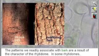 Plants - Secondary Plant Body