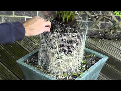How to protect ferns [video]