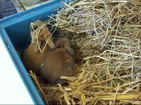 Het verzorgen van mijn konijn deel 1