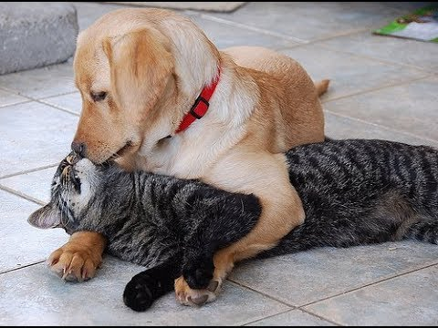 Funny cat videos - Funny Cats Love Dogs Videos 2018  TimeSquad
