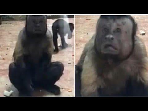 Der Menschen-Affe