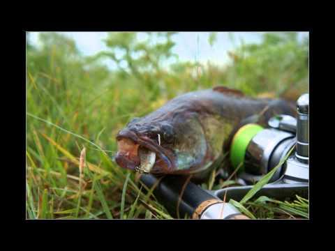 нанкпех рыбалка