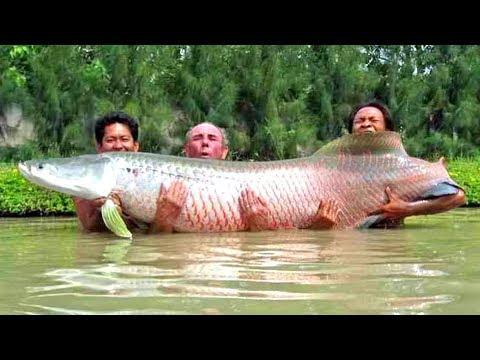 7 ШОКИРУЮЩИХ моментов на рыбалке снятых на камеру - DomaVideo.Ru