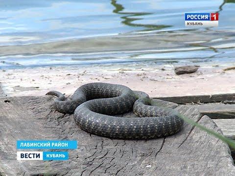 Во время рыбалки мужчину покусали 37 змей - DomaVideo.Ru