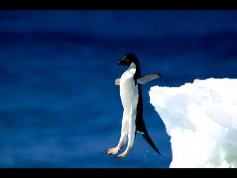 Kaukázus – Pingvin