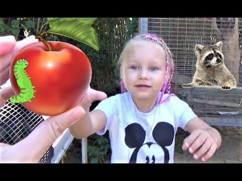 Алиса кормит ЕНОТА !!! Мини зоопарк для детей ! Alice feeds the RACCOON !!! Mini zoo for kids ! (видео)