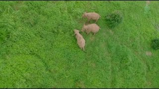 Follow 3 elephants to visit their home