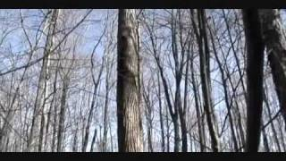 Types Of Trees In Nature.wmv