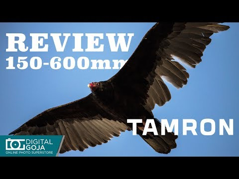 The Awesome Tamron 150-600mm G2 Lens   Review & Giveaway