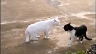 Top funny animal video clips mixed together to make greatest youtube video ever, i am sure after you watch it you will get a smile