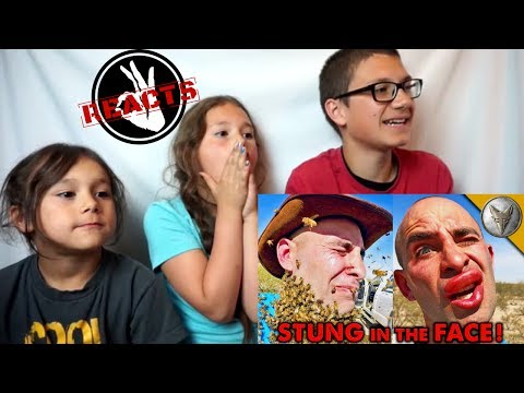 3000 BEES ATTACK MY FACE! Reaction!!!