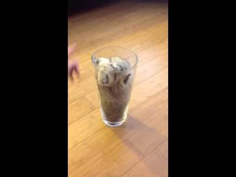 Gattino in un bicchiere