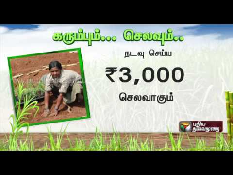 How-much-is-required-to-cultivate-1-acre-of-sugarcane