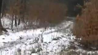 Mężczyzna nagrywał psa podczas spaceru w lesie. Nagle w oddali zauważył lewitującą dziewczynkę :O