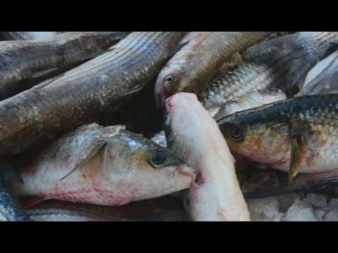 Mεγάλη ψαριά στην Αργολίδα
