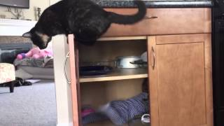 Niemowlak schował się w kuchennej szafce! Reakcja kota jasno pokazuje co sądzi o swoim człowieku!